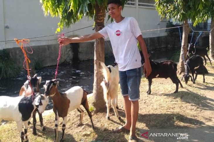 DKPPP Lhokseumawe pastikan hewan kurban aman dikonsumsi.