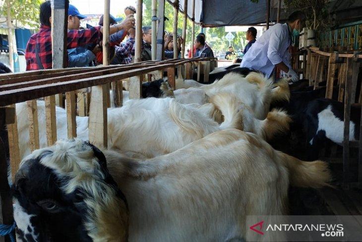 Petugas kesehatan di Kediri periksa hewan kurban milik pedagang