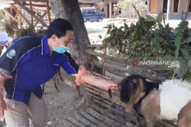 Disnak Magetan periksa kesehatan hewan kurban, pastikan aman dikonsumsi