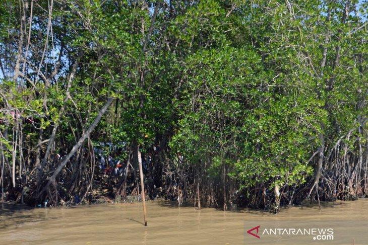 Tumpahan minyak mentah belum berdampak ke hutan mangrove
