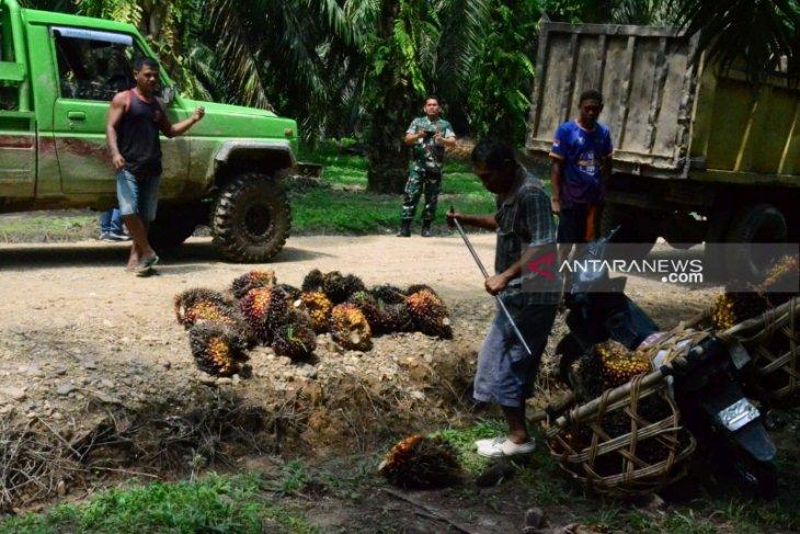 Warga Hutaraja Lamo sudah bisa melewati jalan TMMD