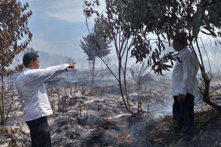 BMKG: Angin kencang pemicu meluasnya kebakaran di  Aceh