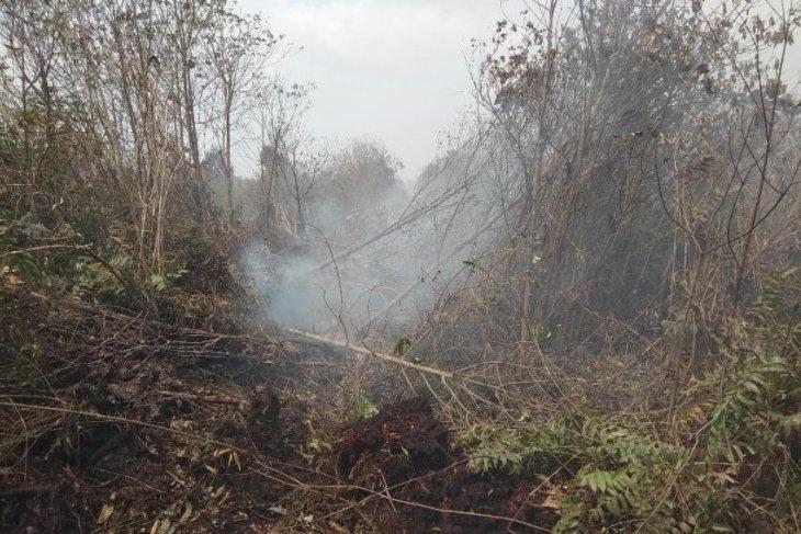 Sejumlah sebaran api bakar jalur perumpukan kayu di lokasi karhutla