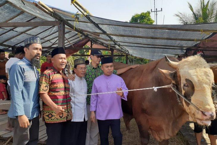 Inilah dusun di Sambas penerima sapi kurban 1,3 ton dari Presiden
