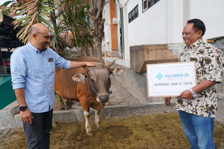 Pelindo III bagikan hewan kurban senilai Rp4 miliar