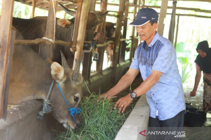 Bermodal dengkul, Umar sukses makmurkan peternak desa
