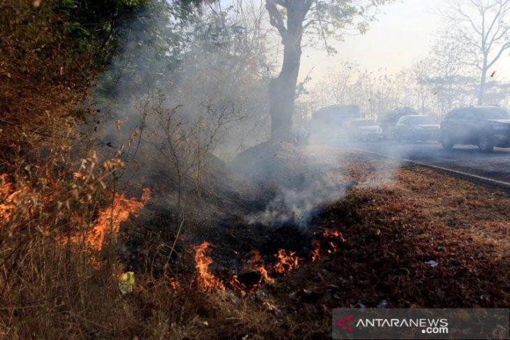 Empat peristiwa kebakaran lahan terjadi di Penajam dalam satu hari