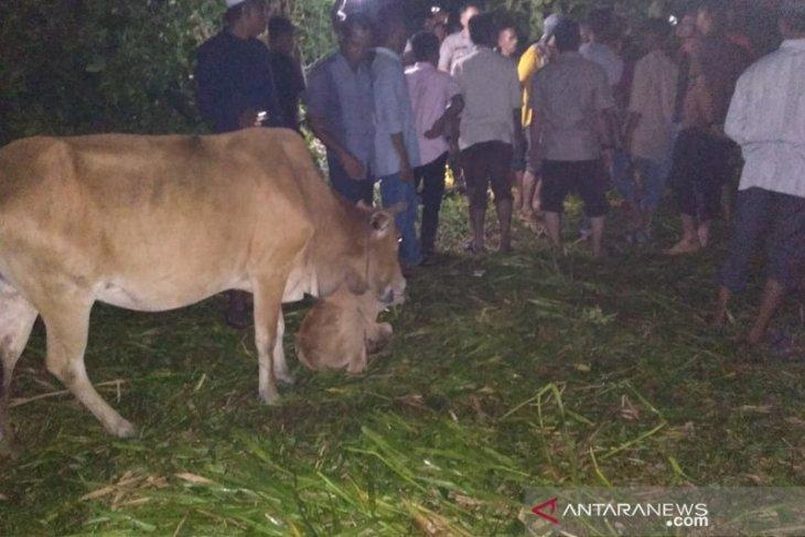 Seorang peternak Aceh Utara ditemukan tewas di kebun