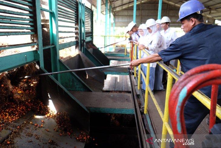 SMN - Lihat pengolahan kelapa sawit di pabrik PTPN IV