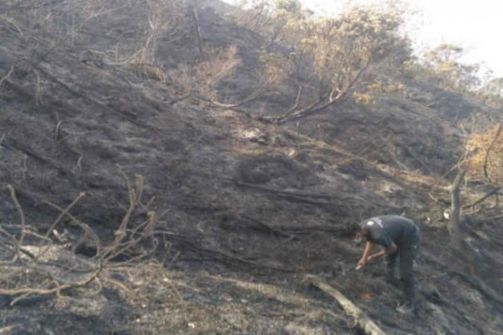 343 hectares of Mount Ciremai forest area gutted