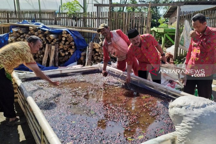 Distankan Rejang Lebong: Kopi asal Vietnam diduga turunkan harga jual kopi petani