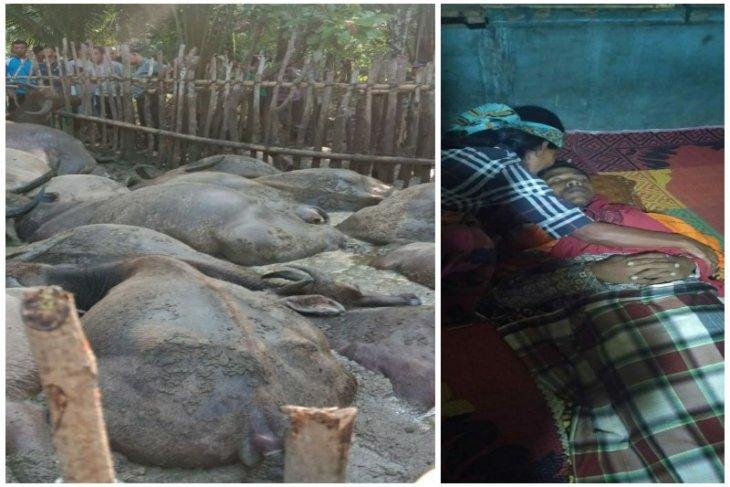 Seorang pengembala tewas disambar petir bersama belasan ekor kerbaunya