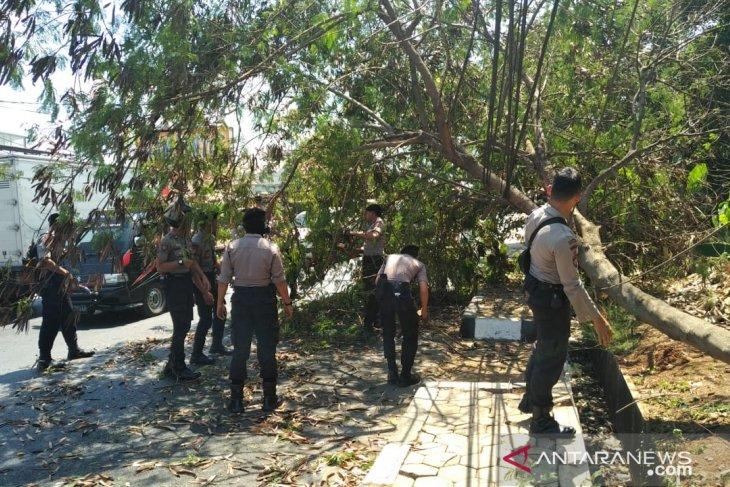 Hembusan angin semakin kencang, pohon rawan tumbang di Purwakarta dipangkas