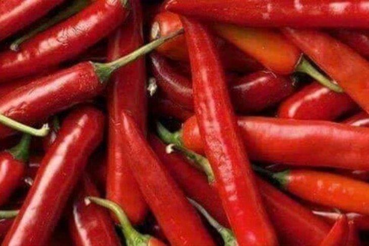 Pasokan terbatas, harga cabai merah di Langkat Rp 100.000 per kilogram