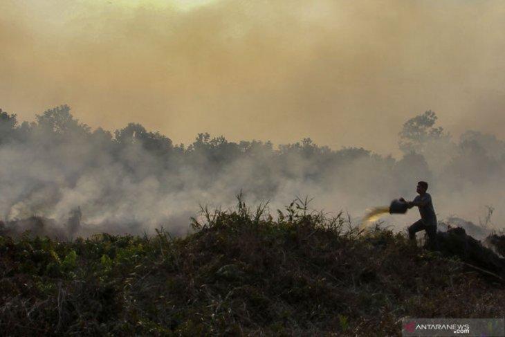 Pemkab tindak tegas perusahaan pembakar lahan