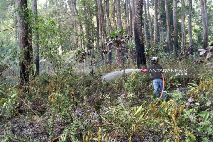 Kebakaran nyaris habiskan hutan mahoni di Rejang Lebong