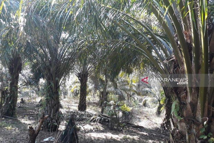 Mukomuko usulkan lahan bangun kebun bibit daerah