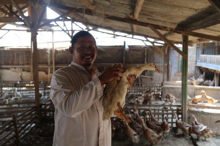 Muhit peternak bebek binaan PT KS beromset Rp1,2 miliar per tahun