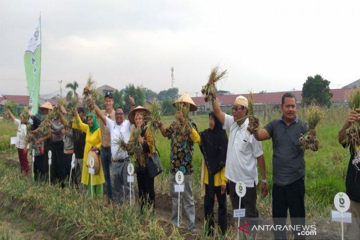 Bejo Indonesia bantu petani Sumut kembangkan bawang merah