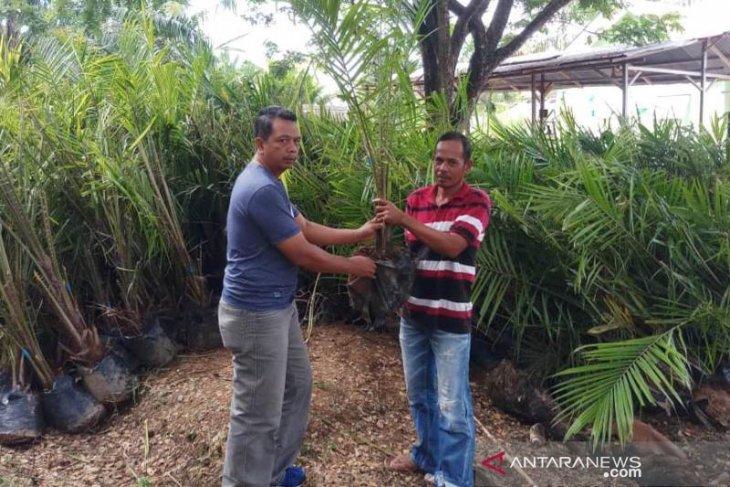 Distan Abdya mulai bagikan bibit sawit gratis ke petani