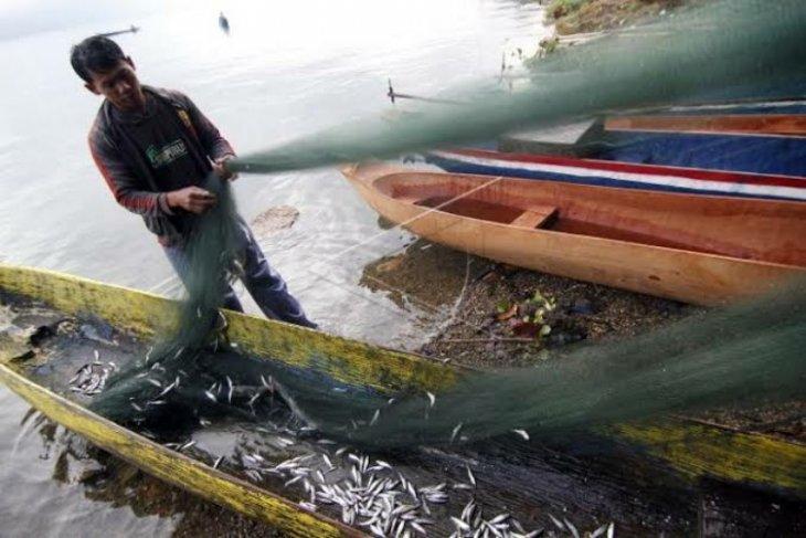 Ikan depik alami penurunan produksi di  Danau Laut Tawar