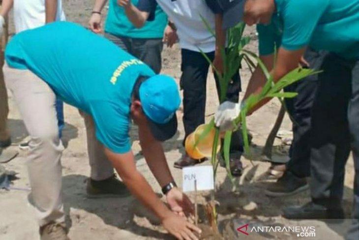 PLN Babel lakukan penghijauan di Kampoeng Rasau