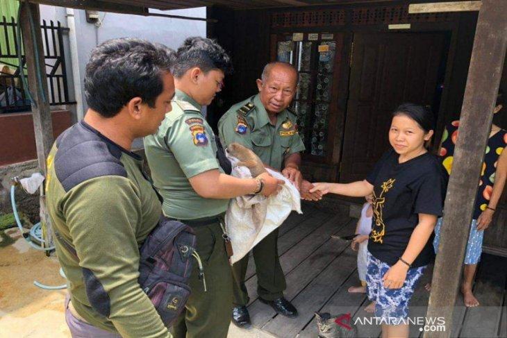 Kukang Dilepasliarkan di Hutan Kota Paringin
