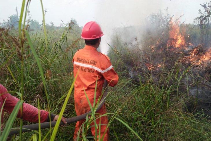 Sekitar 488 hektare lahan di Tanjabtim Provinsi Jambi terbakar