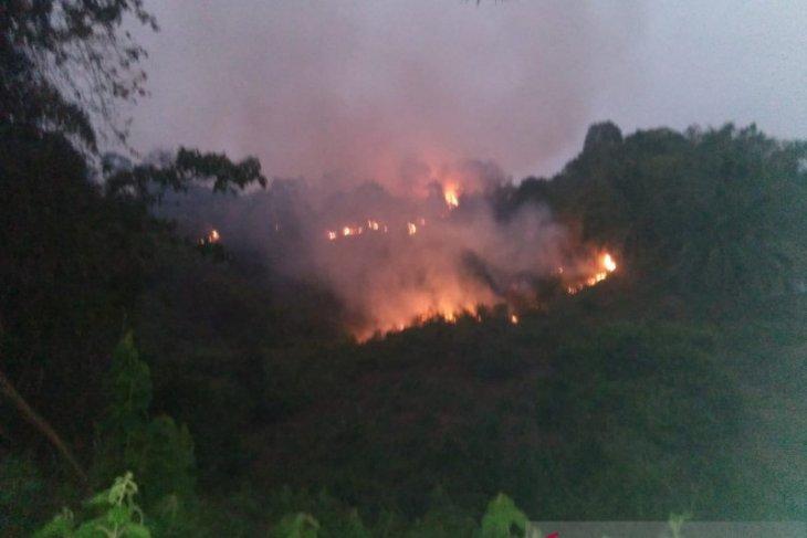 Masih terjadi, 250 hektare kawasan Tahura Sultan Taha Jambi terbakar