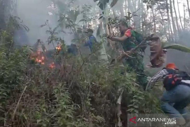 Kebakaran landa hutan pinus milik Perhutani di Kampung Cigadog Sukabumi