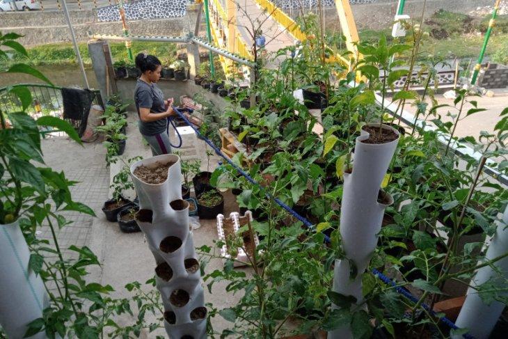 Dodol tomat solusi naikan nilai tambah