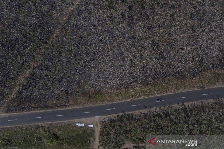 Kebakaran Hutan Di Jawa Barat