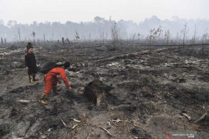 328.724 hektare hutan-lahan terbakar selama Januari-Agustus
