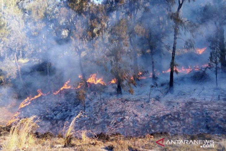 Kebakaran hutan di Gunung Semeru mengarah ke Blank 75 berketinggian  3.676 meter