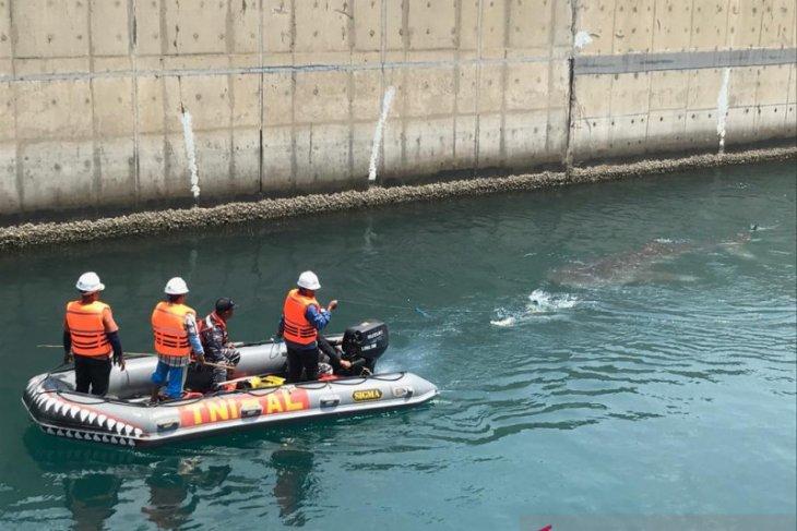 Profauna apresiasi penyelamatan hiu paus di Kanal PLTU Paiton