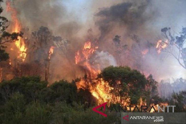 Polres Penajam Dalami Kebakaran Lahan Di wilayah Petung-Giripurwa