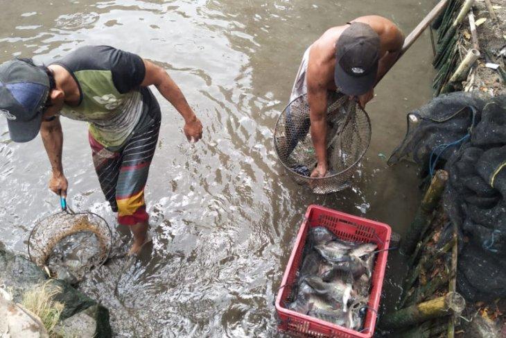 Capai 1.891 ton, produksi ikan tawar Lebak triwulan I-II 2019