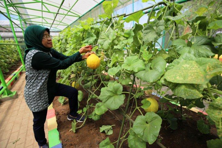 Mini Agrowisata jadi wisata edukasi pertanian di Surabaya