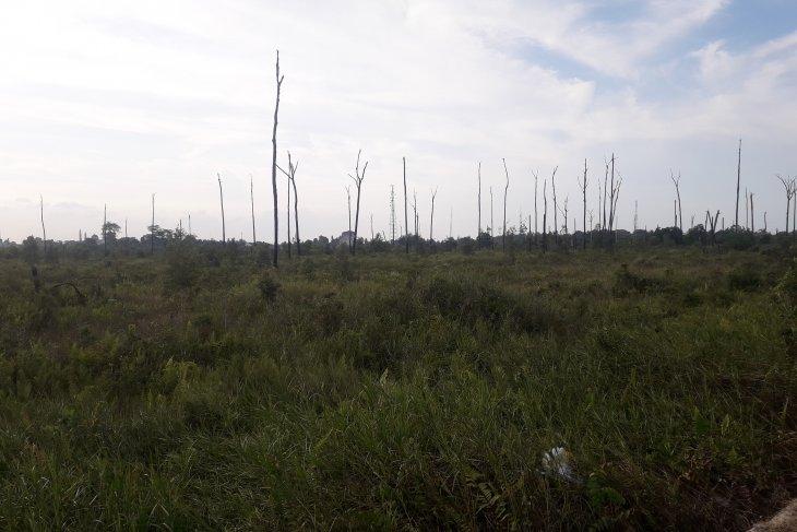 4.500 batang bibit penghijauan di hutan kota Bangka Tengah gagal tumbuh