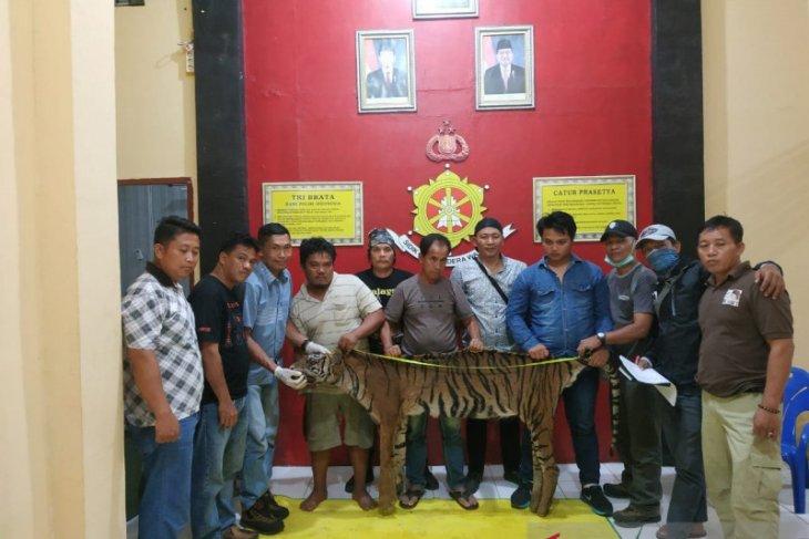 Tiga pemburu harimau ditangkap tim gabungan di Bengkulu