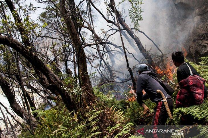 Kebakaran Hutan Kawasan Kawah Putih