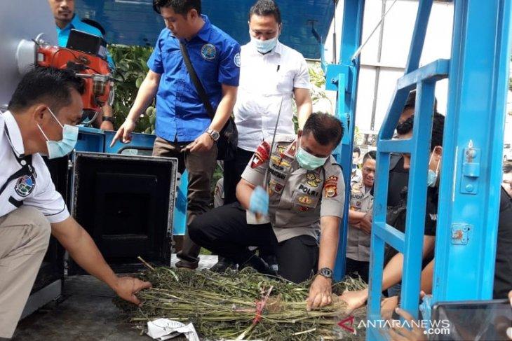 Kapolda Bengkulu musnahkan 55 batang ganja yang ditanam warga di rumah