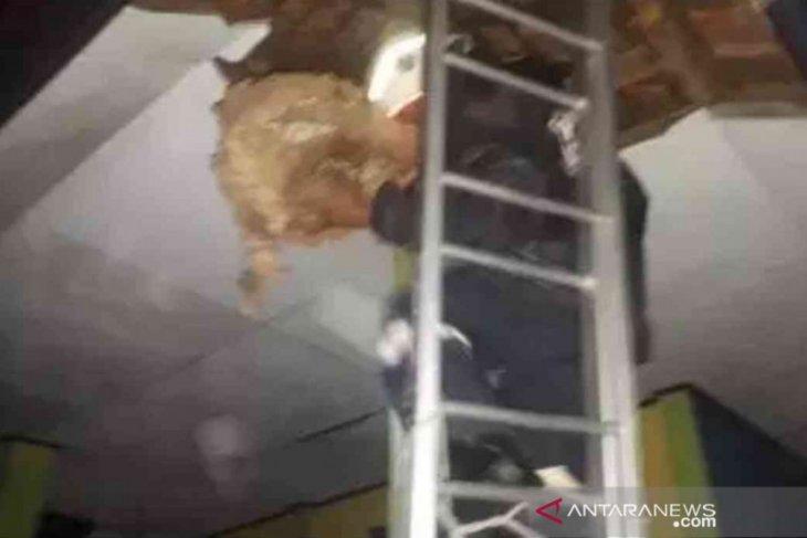 Sarang 'tawon ndas' di Bekasi capai puluhan