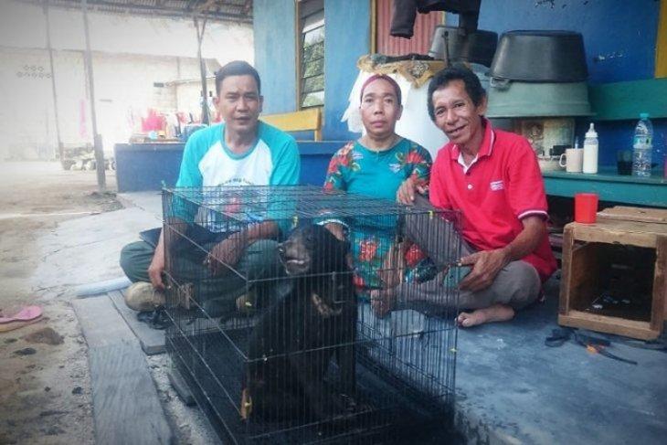 Anak beruang ditemukan warga,  diserahkan warga ke BKSDA Sampit