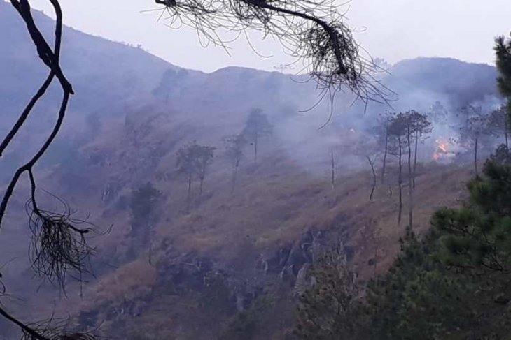 Blaze tears through forest on Mount Andong in Magelang