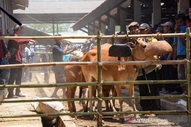 Inseminasi buatan berhasil tingkatkan kualitas sapi di Purwakarta