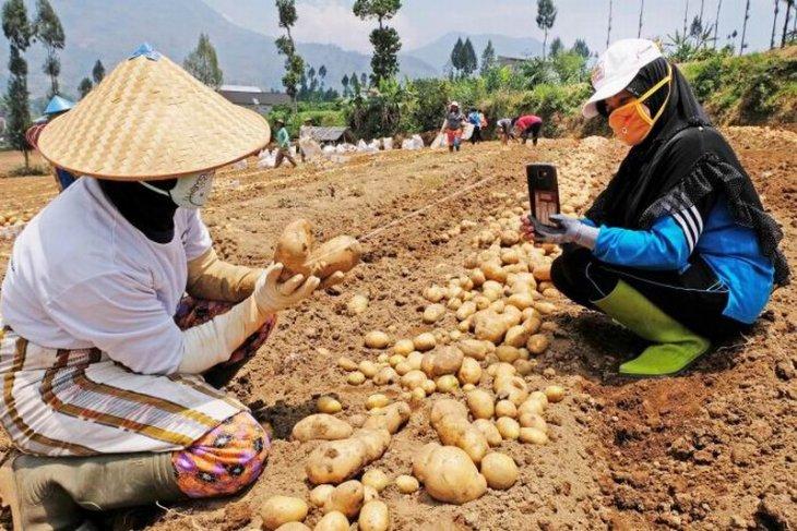 Pemasaran hasil pertanian