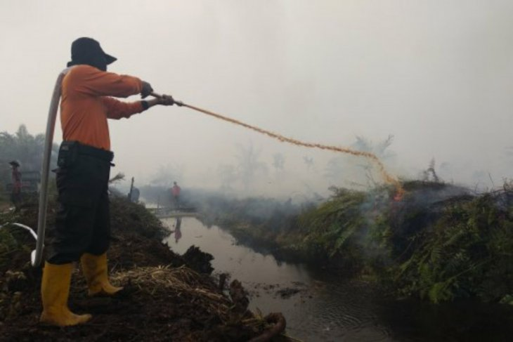 Warsi: 126 ribu hektare hutan dan lahan telah hangus terbakar