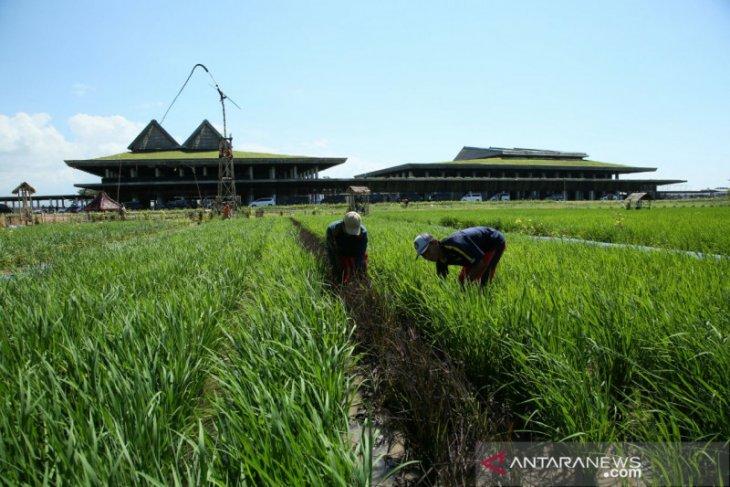 Bandara Banyuwangi buka rute penerbangan baru ke Yogyakarta