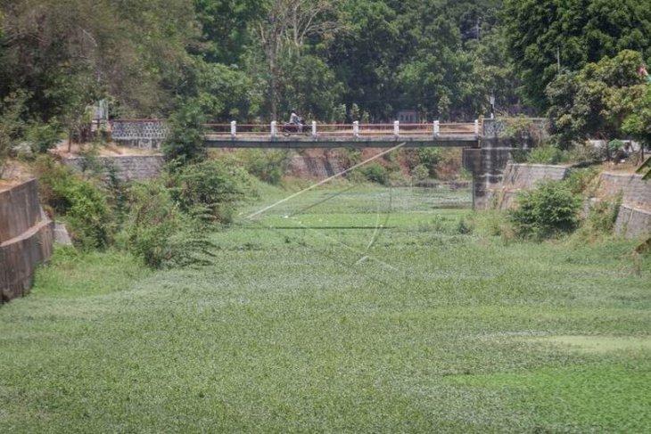 Sungai dipenuhi enceng gondok